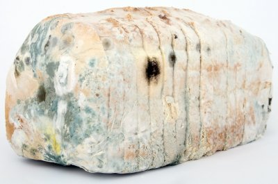 A loaf of mouldy bread to represent the topic of the article - The Hard Truth About Eating The Criticism Sandwich