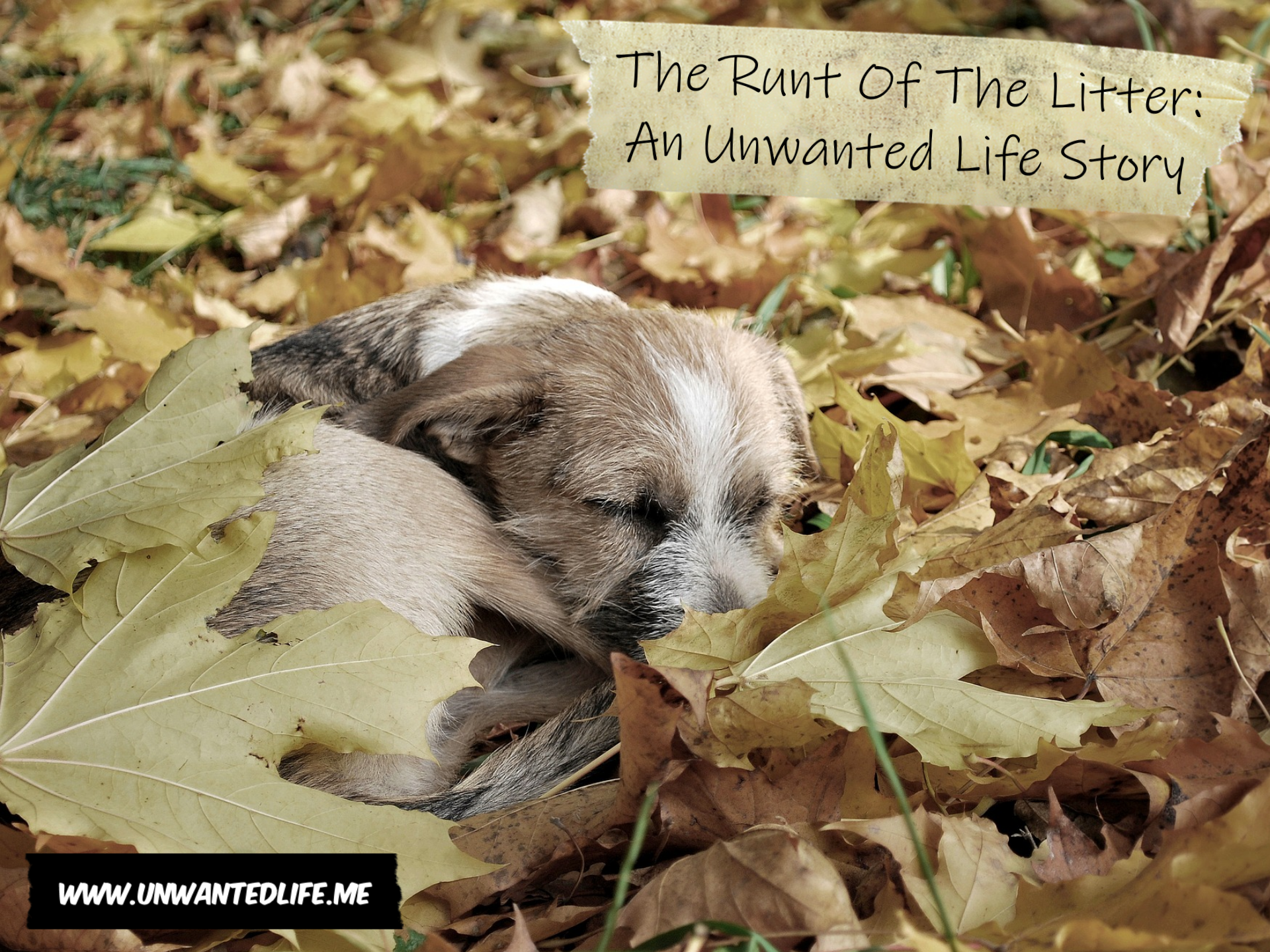 A photo of a puppy sleeping among the leaves outside to represent the runt of the litter
