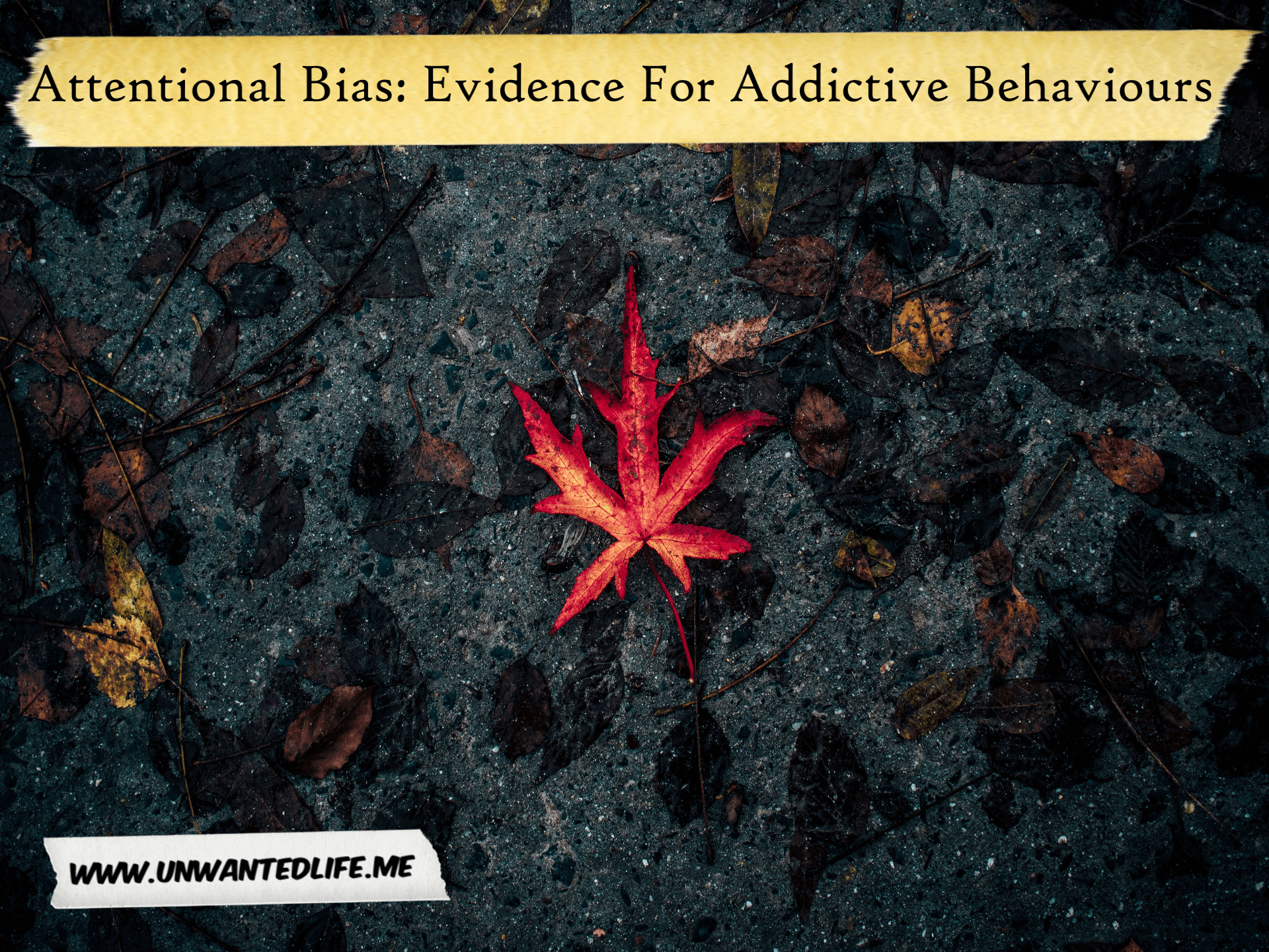 Attentional Bias: Evidence For Addictive Behaviours | Mental Health and Wellness | Unwanted Life