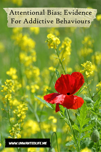 A photo of a lone red flower among a field of yellow flowers to represent the topic of the article - Attentional Bias: Evidence For Addictive Behaviours